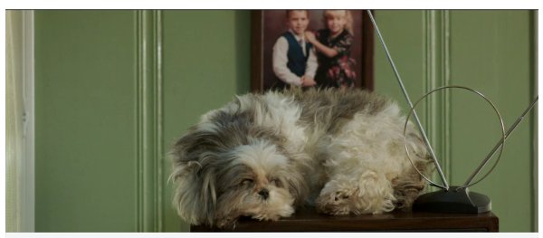 Dead Stuffed dog in This is Happening