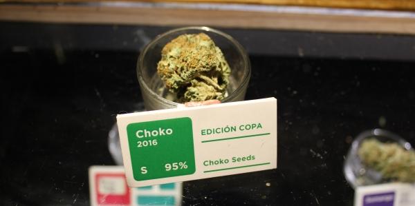 Choko cannabis strain at Club Choko
