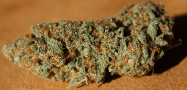 Feature Image Thin Mint Girl Scout Cookies Strain Review