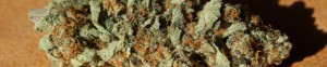 Slider Image Thin Mint GSC Strain Review