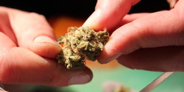 Chemdawg cannabis strain at Dampkring Original AMS