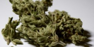 Low quality image of Somango cannabis strain