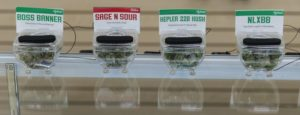 Green Dragon marijuana display cases