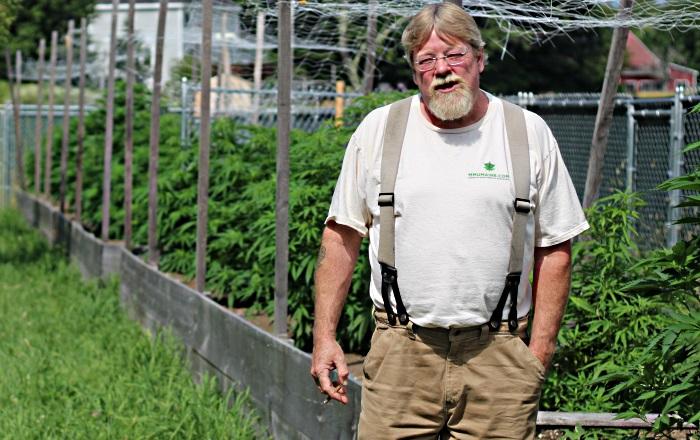 Outdoor marijuana grown by King Bishop