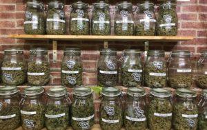 Cannabis Selection at The Plug Social Club Barcelona