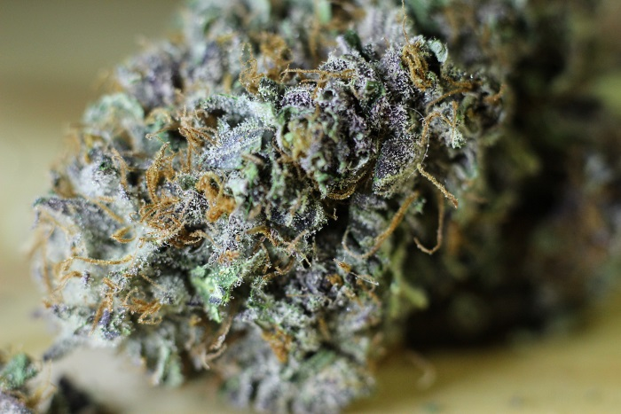 Indoor Flower for Barcelona Marijuana Info Article
