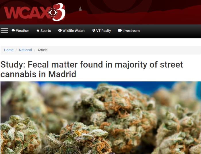 WCAX Headline Image - Madrid Cannabis Study