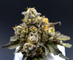 NuVue Pharma Dispensary Colorado Springs