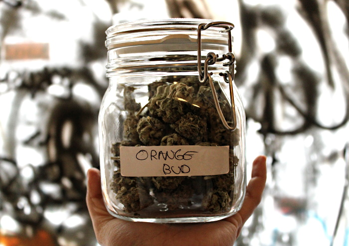 Orange Bud strain is a combination of two members of the 100% Skunk family
